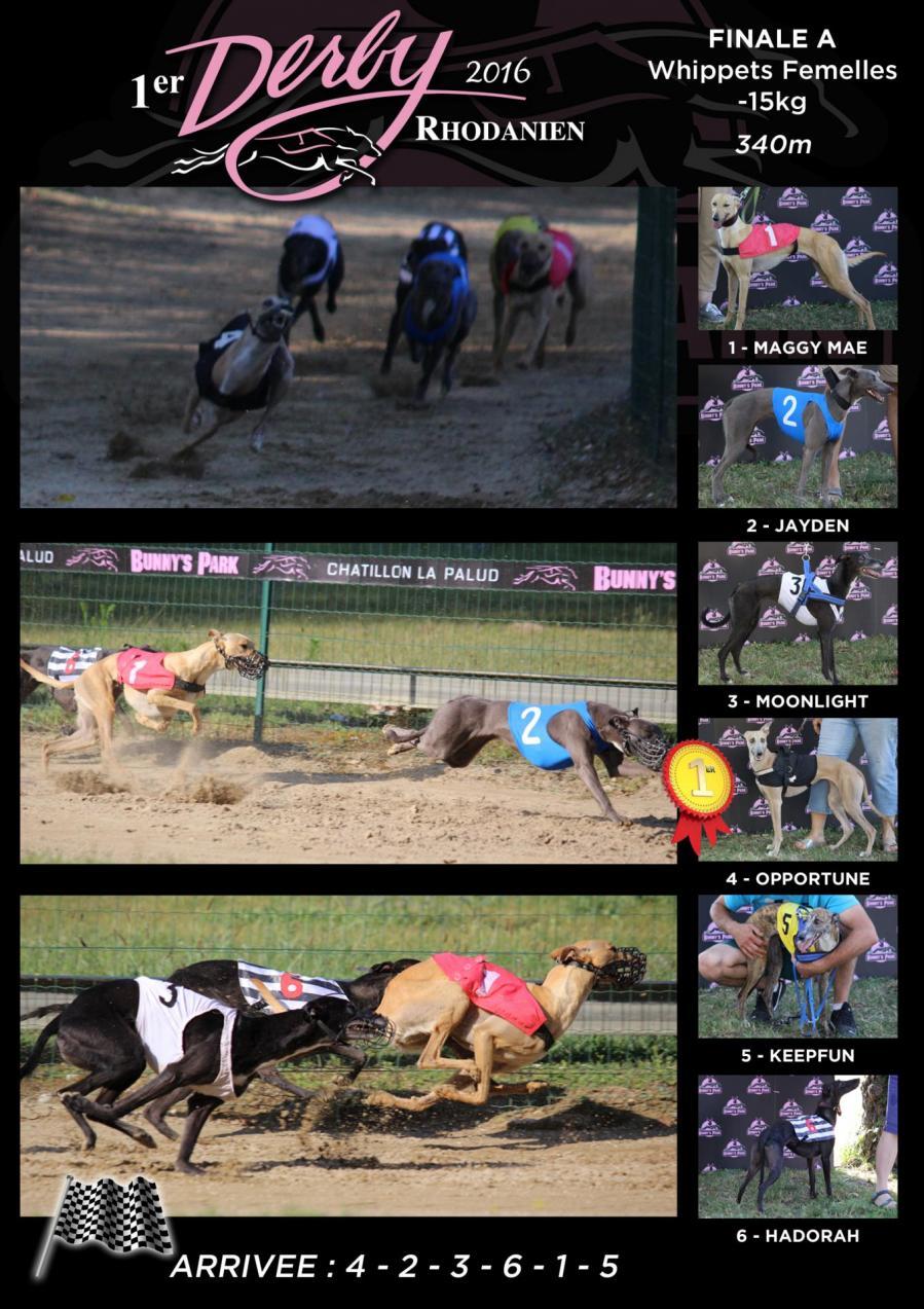 Derby finale whip femelles 15kg